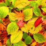 秋!! 寒くなってきました(;^ω^)